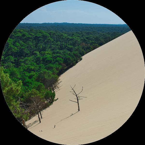 přírodní kartáček oživuje pouště