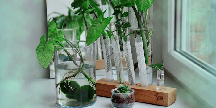 pokojové rostliny pro kvalitnější život