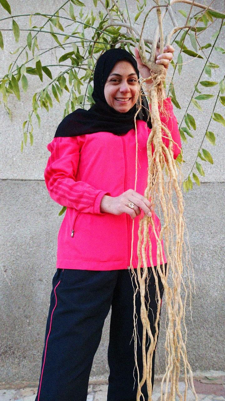Rawtoothbrush roots