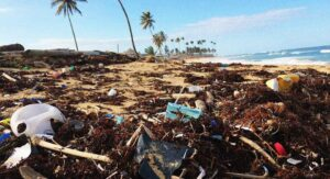 polluted beach by plastic waste